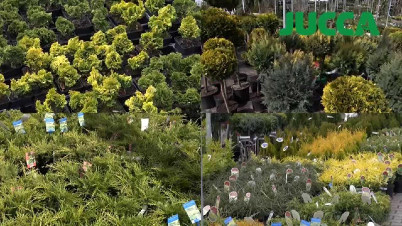 Centrum Ogrodnicze Jucca Wiosna 2015
