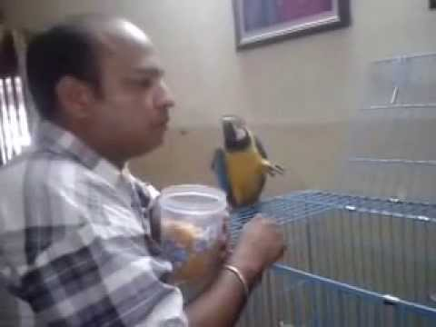 PET SHOP CHANDIGARH +91-98153-71968 SHEENA KENNEL MOHALI ! PANCHKUILA ! INDIA