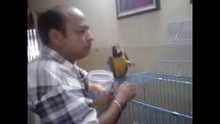Pet Shop Chandigarh +91-98153-71968 Sheena Kennel Mohali ! Panchkuila ! India