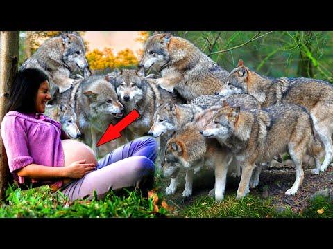 Волки никого не подпускали к беременной. Они скалились и рычали. И когда уже охотники решили...