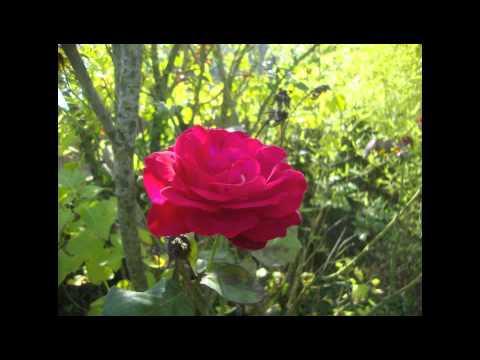 "Gabriel Fauré - ""Les Roses d'Ispahan"" - Massimo Crispi"