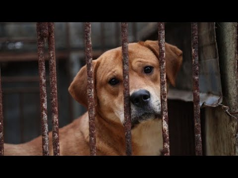 Korea dog meat campaigners accused of barking up wrong tree