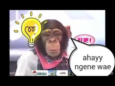 Full Download Monyet Bisa Ngomong 1
