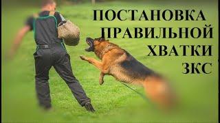 г.Набережные Челны.Дрессировка собак.Развитие хватки.