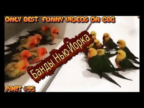 Вечерний 95 квартал » Лучшие видео приколы онлайн
