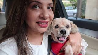 My 16 years Old Super Active Dog | Coco's Outing |  Ss vlogs :-)