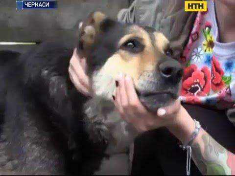 Без прививки против бешенства остались собаки
