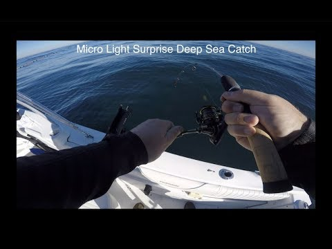 How to rig Fish Field Thumper Tail Swimbaits for Lingcod ...