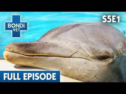 🐬 Dolphin May Have Cancer | FULL EPISODE | S05E01 | Bondi Vet