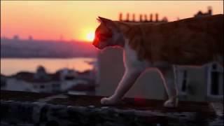 Город кошек / Keidi (2017) Трейлер с русскими субтитрами