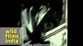 Three burnt to death in Muzaffarpur - Bihar