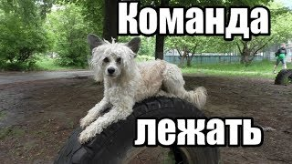 Как научить собаку КОМАНДЕ ЛЕЖАТЬ - Дрессировка собак - Понять собаку