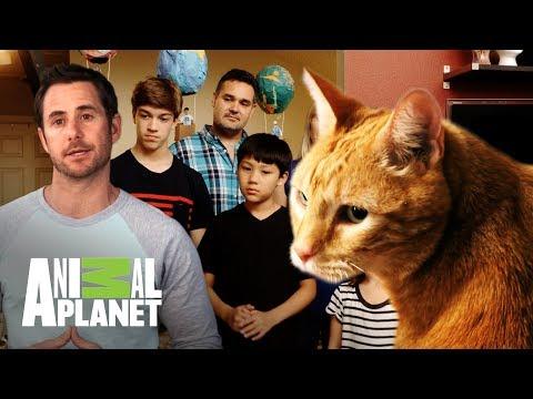 ¡Un gato obeso! | Kilos de mascota | Animal Planet