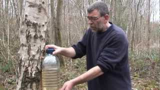 how to tap a birch tree using turned oak heartwood tap