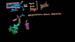 Chronic Bronchitis Pathophysiology