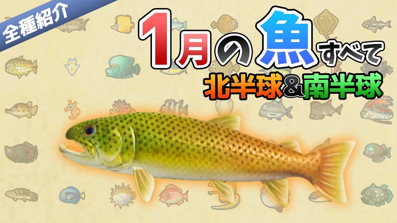 買取 あつ森 魚