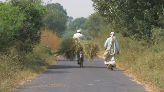 Two Indian villagers taking fodder to feed their cattle from an Indian farmland