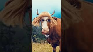 La Vaca Lola se alisó el pelo