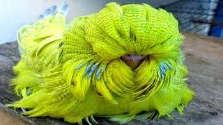 7 Papagaios Exóticos Que São Únicos No Mundo