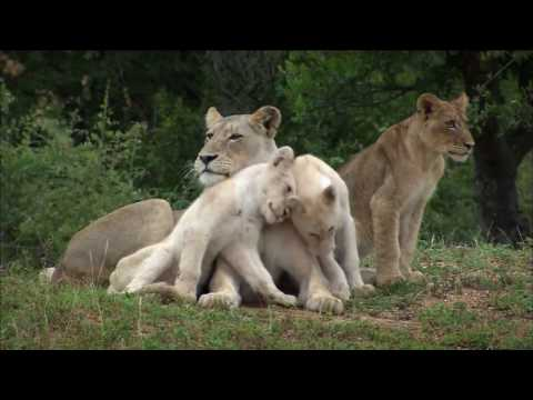 International Geographic The Rare and Exotic Animals   Documentary
