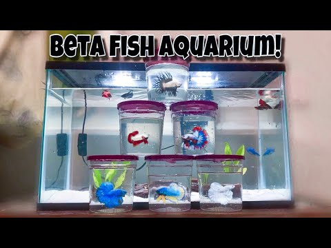 Betta Fish *ONLY* Aquarium!!