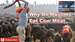 Why Do Muslims Eat Cow Meat || Musalman gaye ka gosht kyun khate hai || Hindi हिन्दी