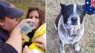 行方不明になった3歳の女児に一晩寄り添った17歳の老犬がオーストラリア...