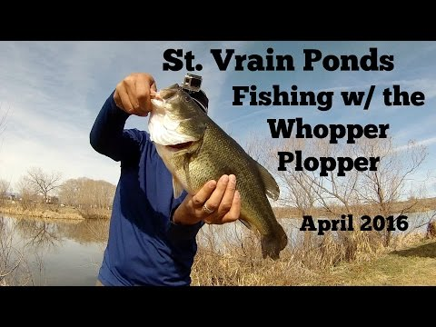 First Time Fishing The River2Sea Whopper Plopper - St. Vrain Park Ponds - April 2016