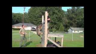 "Police K9 Patrol Dog Grip Training Using ""the Wall"""