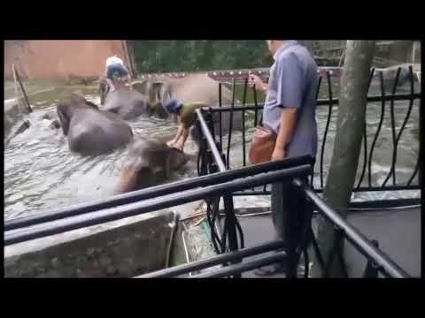 gajah-mandi-wisata-jatim-park-2-batu-malang