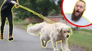 How To STOP Your Dog Pulling On The Leash - EXTREME TRANSFORMATION