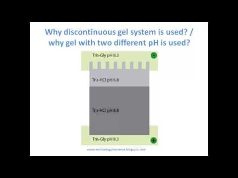 SDS PAGE Principle And The Use Of Discontinuous Buffer System