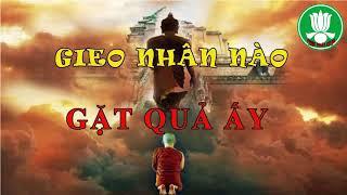 GIEO NHÂN nào GẶT QUẢ ấy TRIỆU người VIỆT đã NGHE và thay đổi SỐ MỆNH nhờ Video này -Phật Pháp Từ Bi