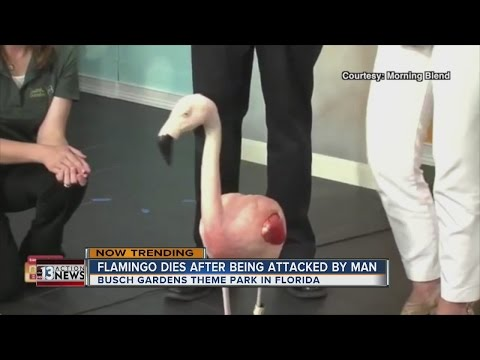 NOW TRENDING: Man kills flamingo