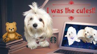 MALTESE DOG WATCHES THEIR OWN PUPPY VIDEO