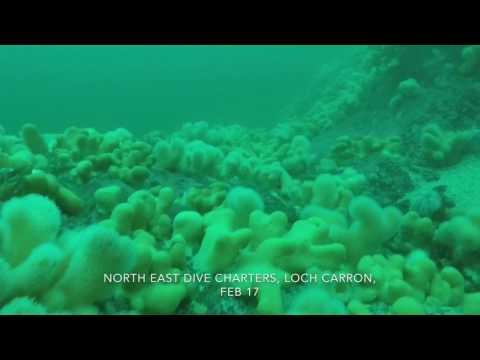 Conservation Bay, boat dive, Loch Carron, Feb 17