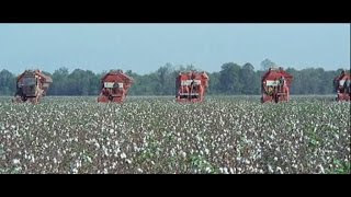IH/Case IH Cotton Picker Timeline (2-Row)