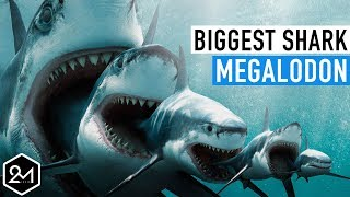 Top 10 Unbelievable Facts About The Biggest Shark Ever : Megalodon streaming