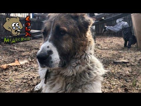 У моей собаки Василисы рак легких. Грустные новости из Медвежьего угла.