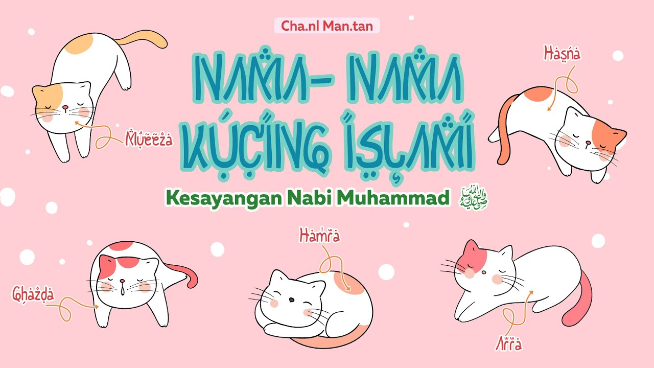 Kucing Kesayangan Nabi Muhammad Ï·º Ini Daftar Nama Nama Kucing Islami Youtube