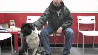 Off Lease Dog Training