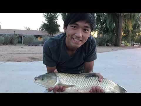 Fishing the Arizona Canal