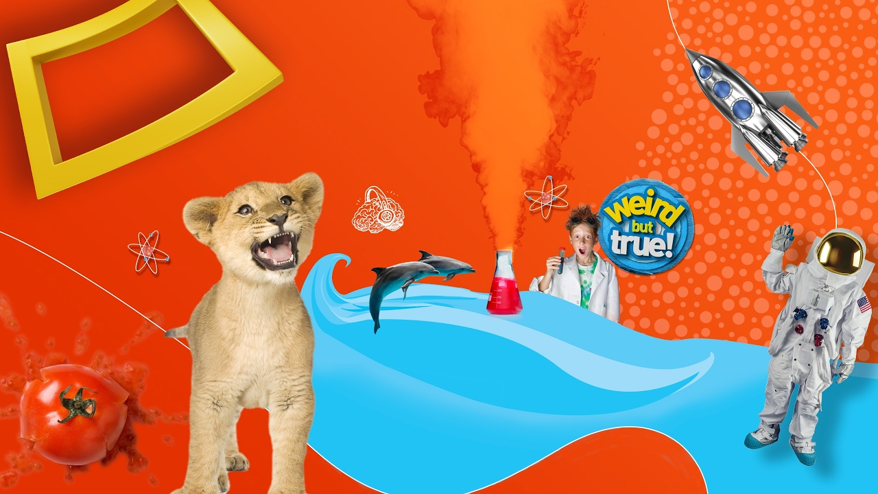 National Geographic Kids Live Stream - YouTube