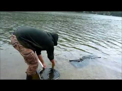 Fishing In West Virginia Catfish And Carp