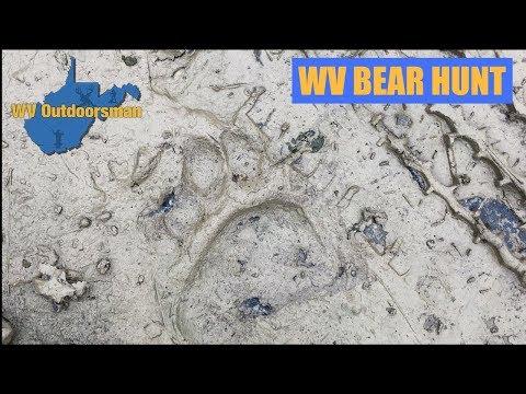WV Bear Hunt