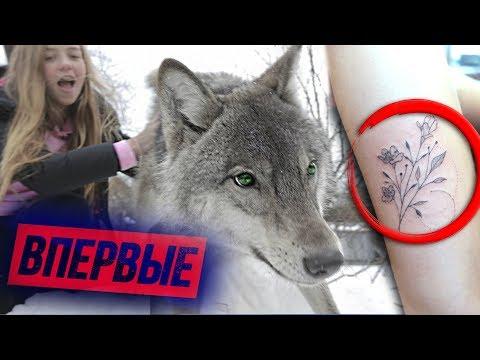 ВПЕРВЫЕ - Дикий Волк / Новая ТАТУ / МИЛЛИОН🍋