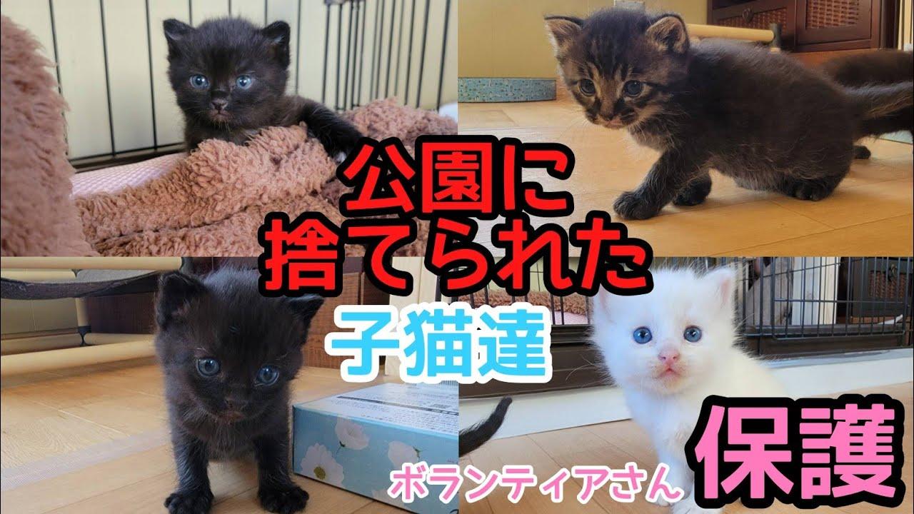 【命が救われました】公園に捨てられた子猫達をボランティアさんが保護してくださいました!