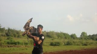 Brahminy Kite & CHE LM Training | Bali - Indonesia