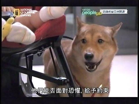[141019].狗狗囚犯