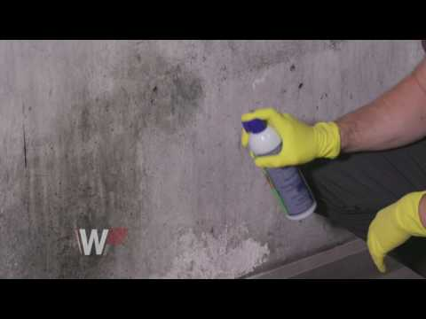 Mold Removal With Concrobium